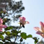 神代植物園(2)